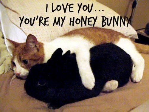 snow-white cat and black rabbit