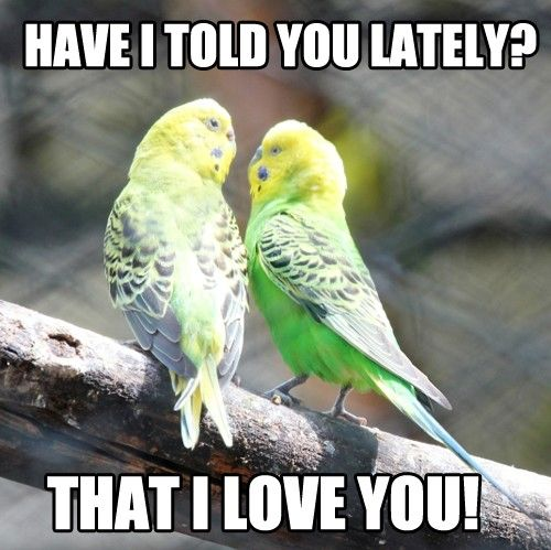 love in the little green parrots