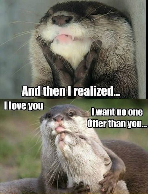 otters and declaration of love