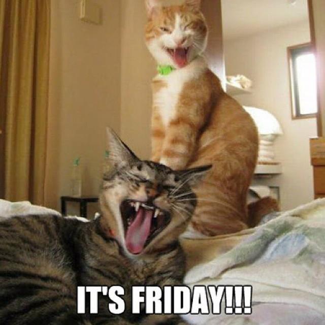 Its friday cats meme