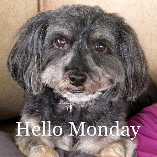 hello monday dog