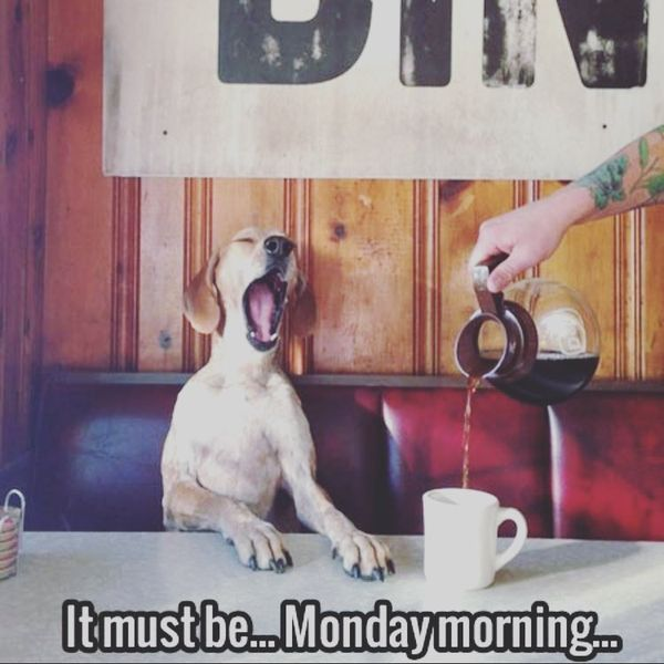 it must be monday morning