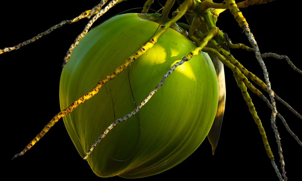 Coconut Water: Good or Bad for You?