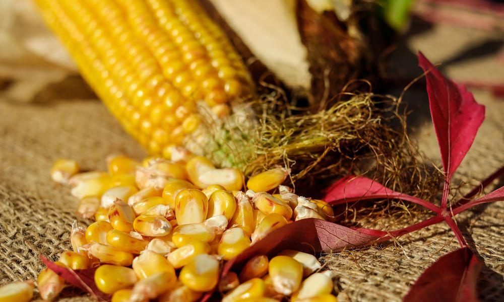 Is Corn Gluten Free?