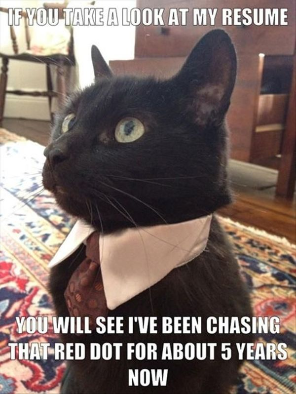 Good Best Black Cat Memes