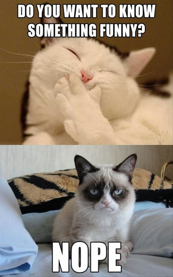 Smooth Clean Cat Memes
