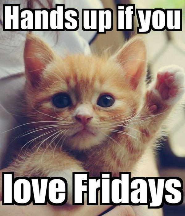 Gentle Funniest Friday Cat Meme