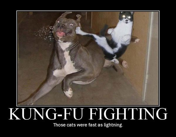 Magnificent Funny Dog and Cat Memes