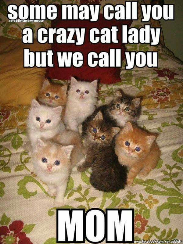 Outstanding Good Cat Lady Memes