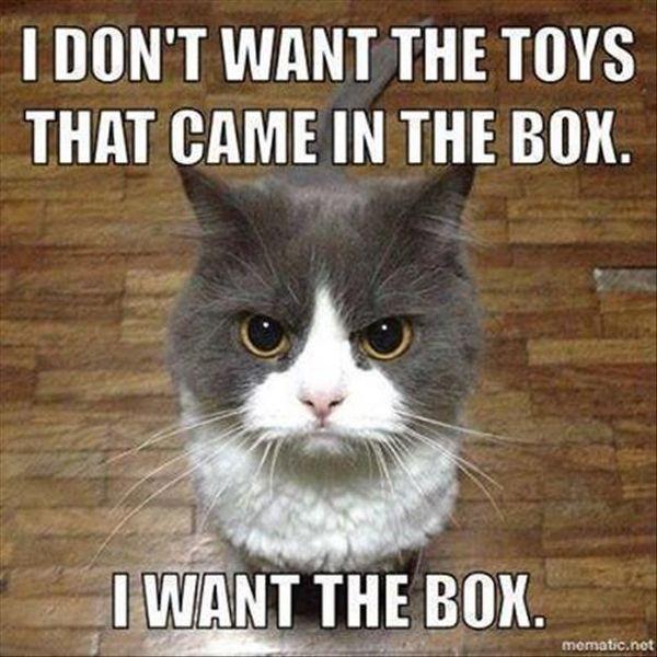 Hypnotizing Hilarious Kitten Meme