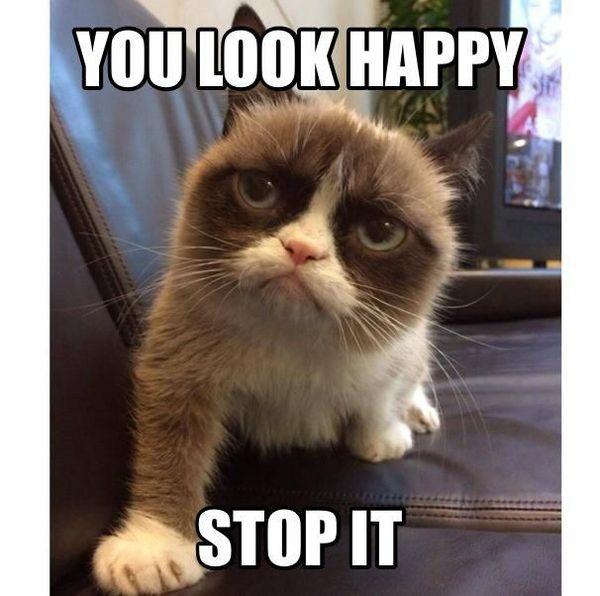 Mean Cat Meme