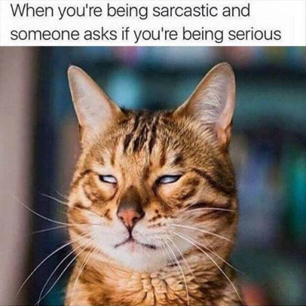 Sarcastic Cat Pictures