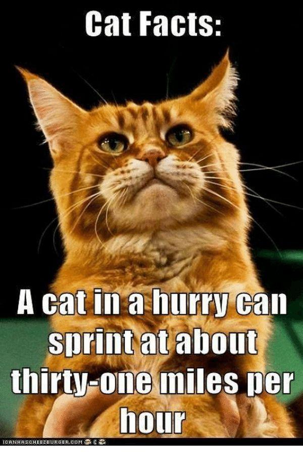 Incredible Cat Facts Meme