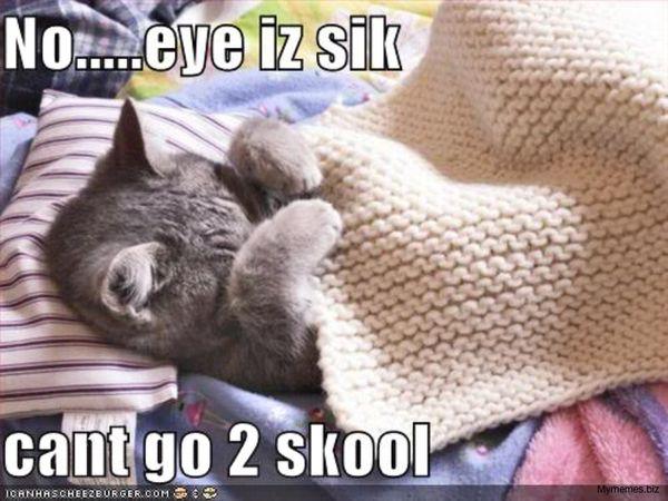 Sick Cat Meme