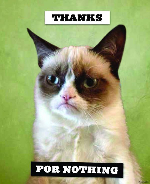 Thank You Cat Meme
