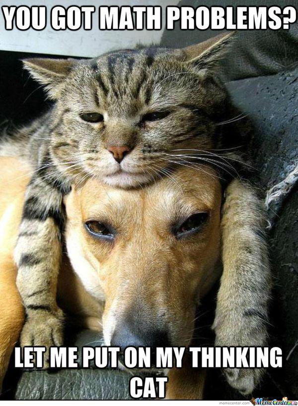 Thinking Cat Meme
