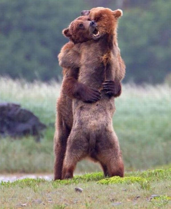 Stunning funny hugging pictures