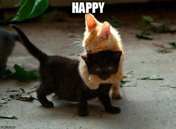 Cute hugging meme