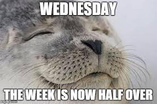 Cool Happy Hump Day Meme 3