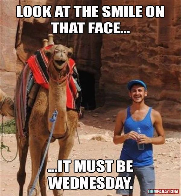 Funny Hump Day Pics with Camel 4