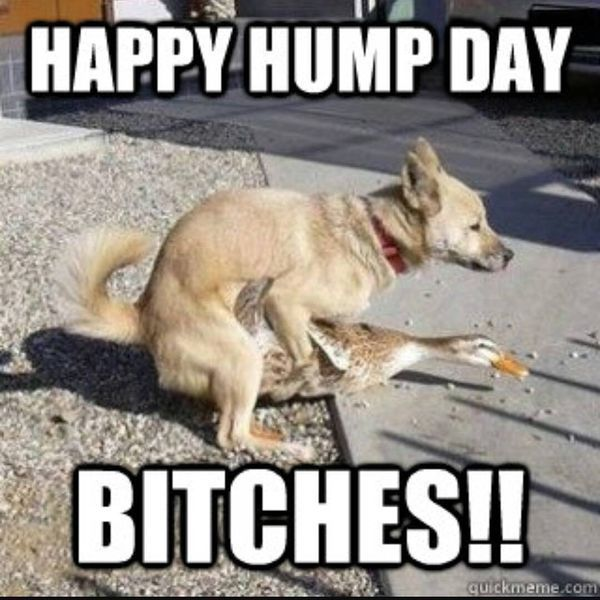 Hump Day Meme Dirty yet Funny 2