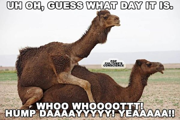 Hump Day Meme Dirty yet Funny 3