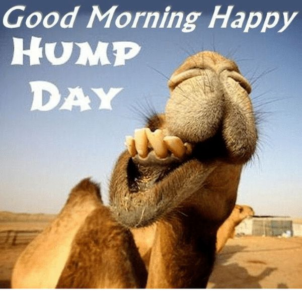 The Best Good Morning Hump Day Memes 1