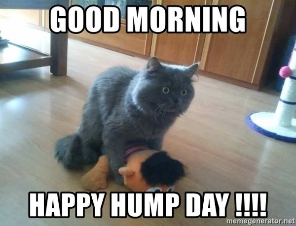 The Best Good Morning Hump Day Memes 5