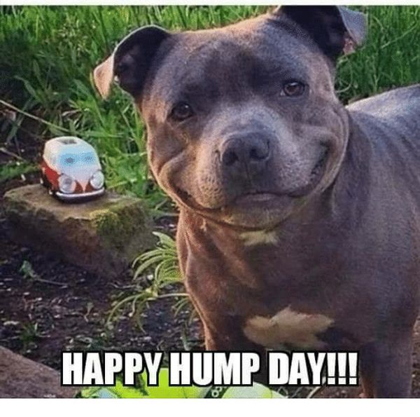 The Best Good Morning Hump Day Memes 6
