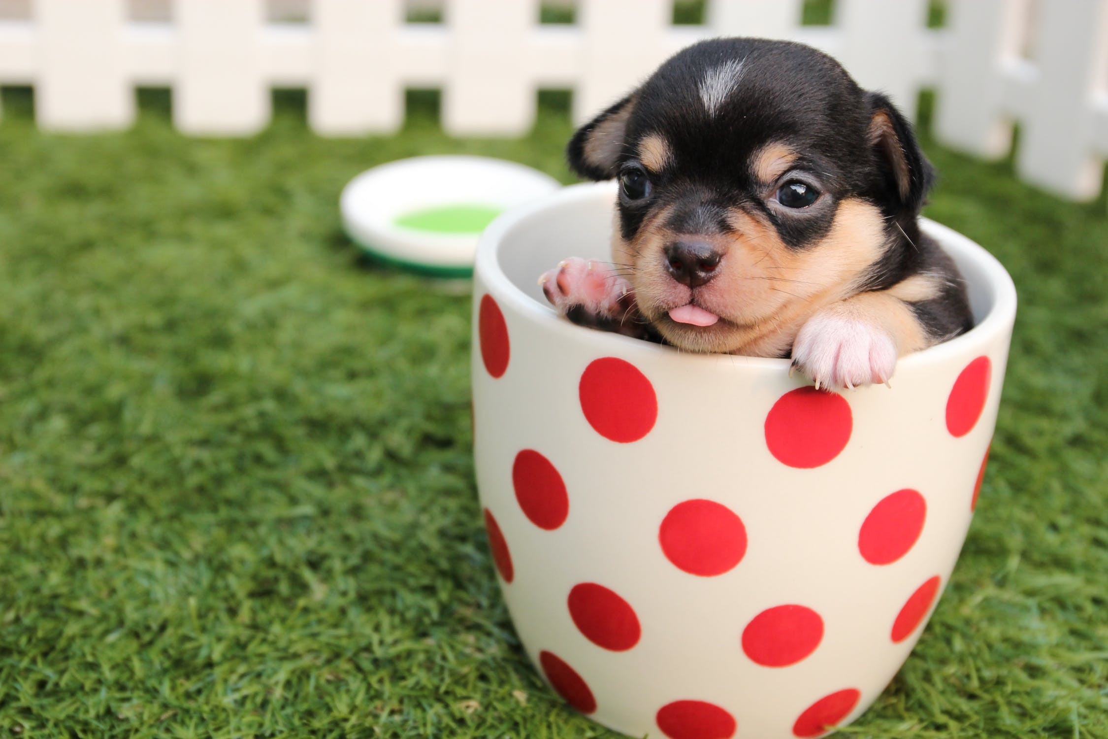 104 Captions To Capture Your Dog S Personality Perfectly For Instagram Healthy Tips