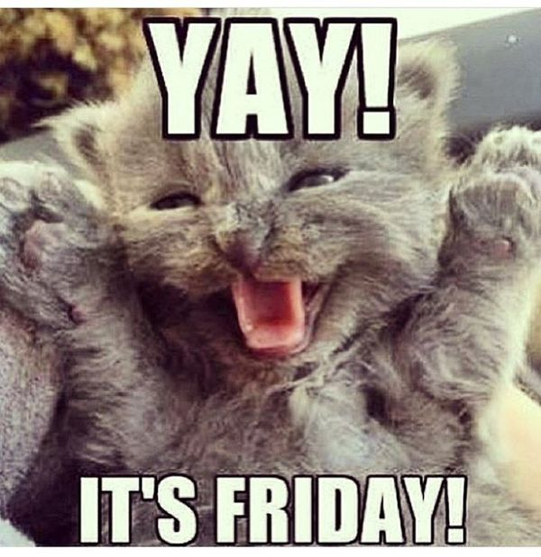 happy friday quotes with cat