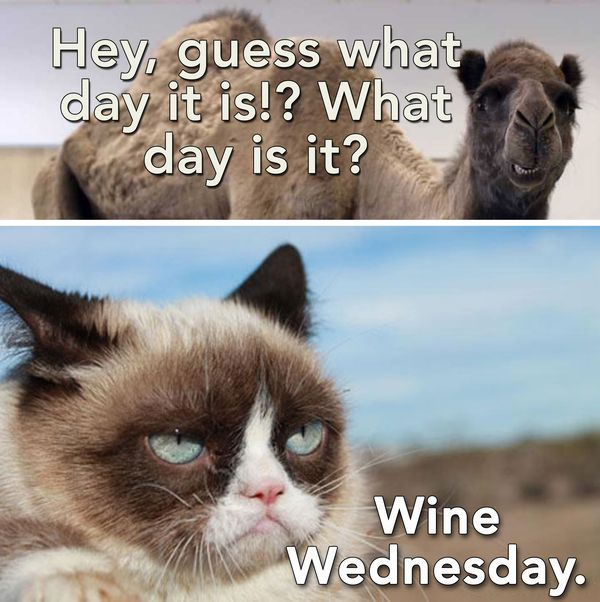 Funny Memes about Wednesday 1