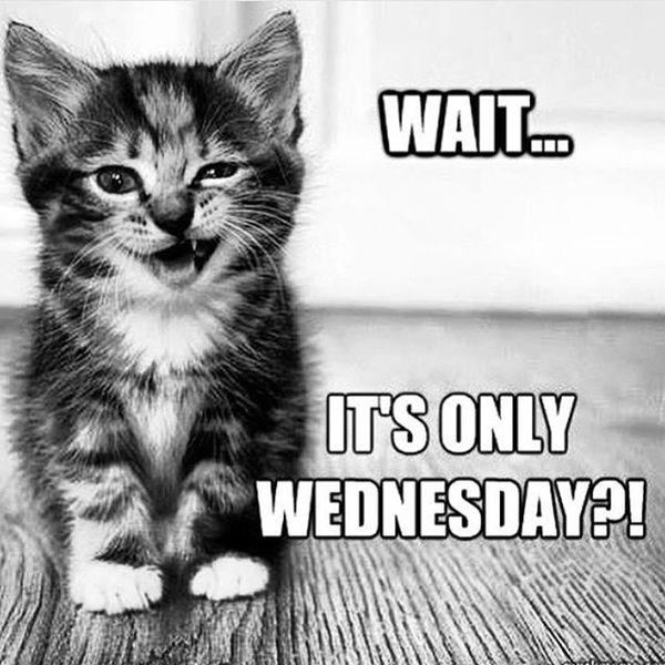 Funny Wednesday Memes 3