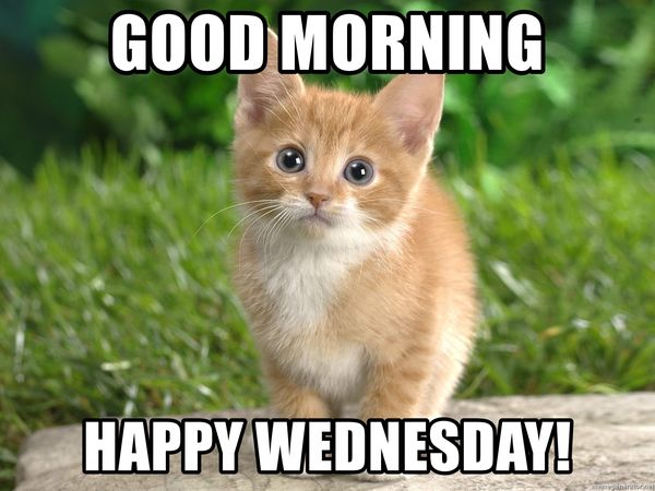 Cool Wednesday Morning Meme 5