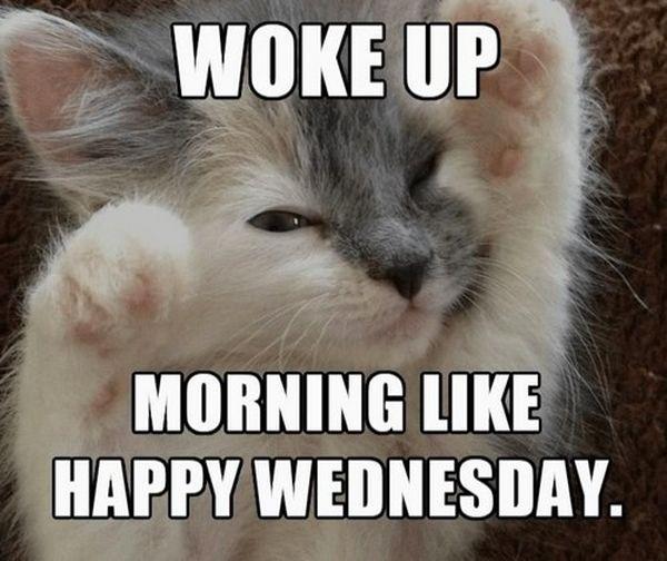 Cool Wednesday Morning Meme 6