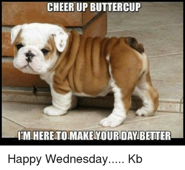 Funny Wednesday Images with Quotes to Wish A Happy Wednesday 4