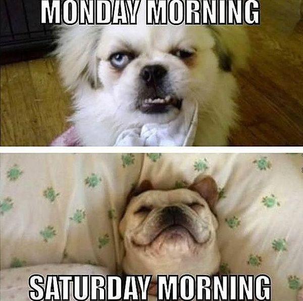 Good Saturday Morning Memes 4