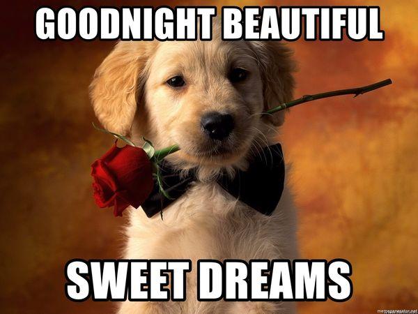 Goodnight Beautiful Meme 4