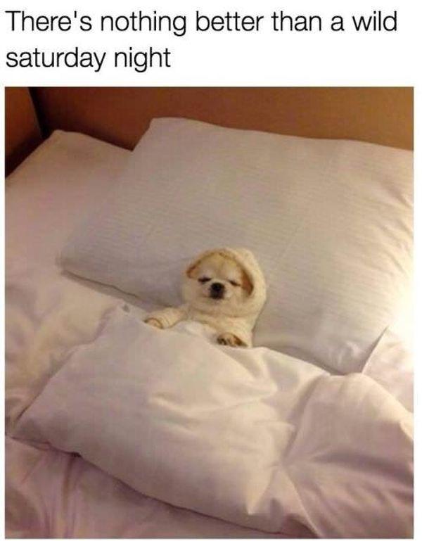 Hilarious Saturday Night Meme 6