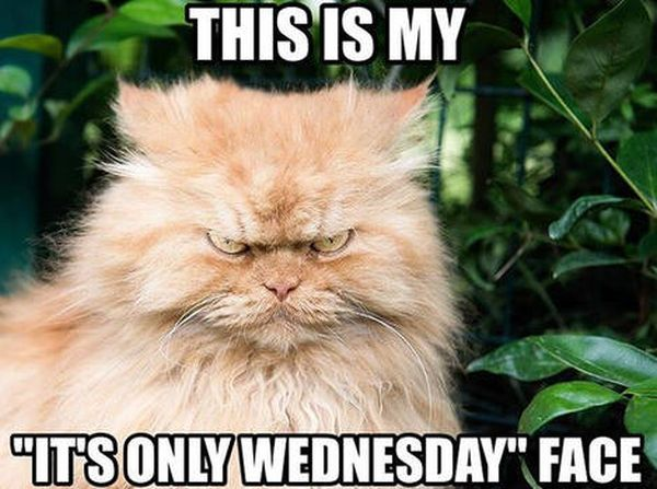 Hilarious Wednesday Work Meme 4