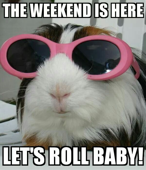 Super Funny Saturday Memes 4