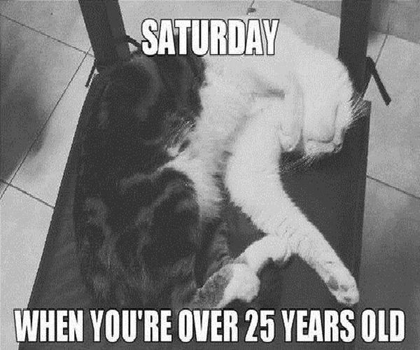 Super Funny Saturday Memes 5