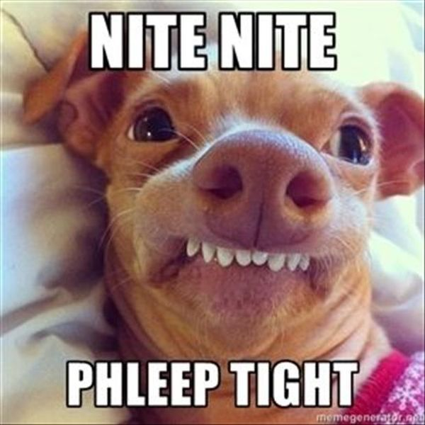 The Best Funny Good Night Meme 3