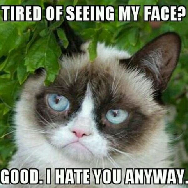 Cute grumpy face meme